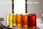 Miel de Tilleul, Acacia, Châtaignier, Garrigue et Montagne