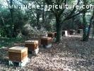 ruches Dadant Peuplées