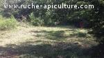 Terrain  pour ruche, colonie d'abeilles miel de châtaignier